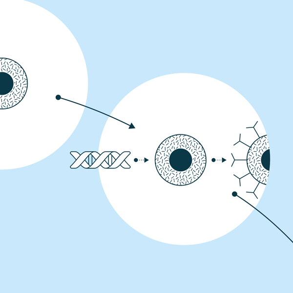 Cellule T reprogrammée en cellule CAR-T