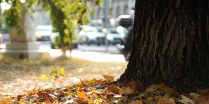 La dépression saisonnière : La luminothérapie au centre du traitement